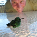 Recovering hummer after collision with window