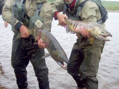 Chum Salmon Fly Fishing