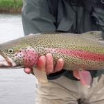 Alaska Trout Fly Fishing
